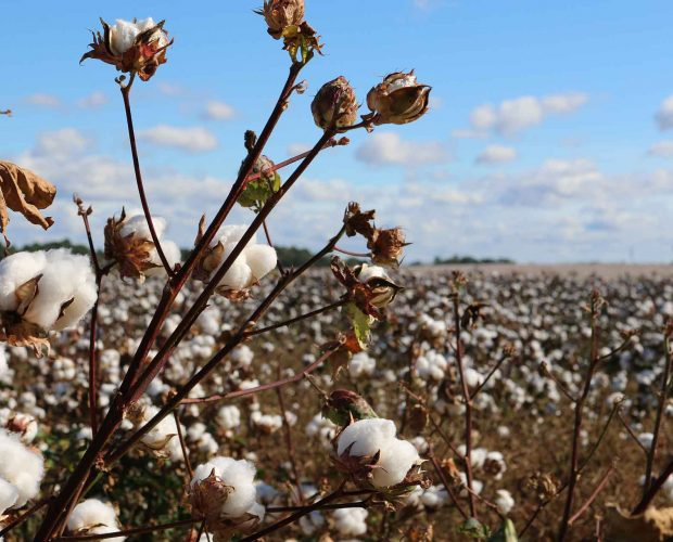 Apparel Entrepreneurship Organic Cotton 101